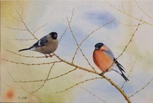 Bullfinch Christmas card by Colin Woolf